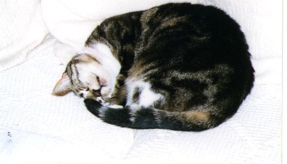 My former cat